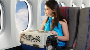 Dog Airplane Fly Emotional Support Animal